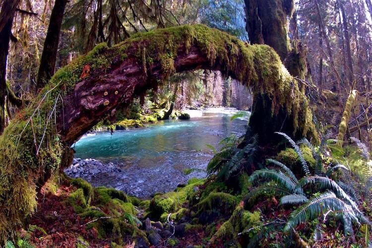 红杉森林国家公园,火山口国家公园,雷尼尔雪山国家公园,奥林匹克国家公园,丰富宝贵的原始生态,一生中必须要去的心灵洗涤之旅!