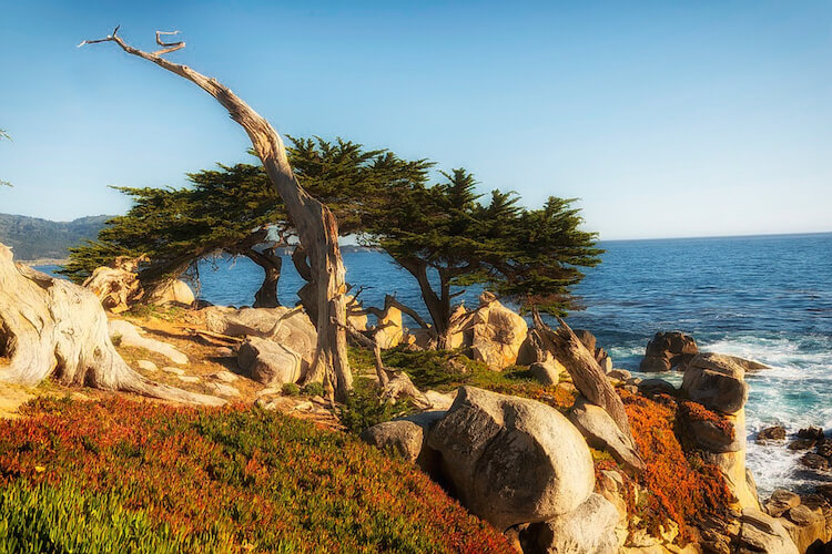 旧金山深度自由, 十七英哩黄金海岸超值特别团