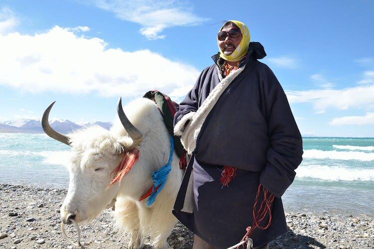 tibet726378sj