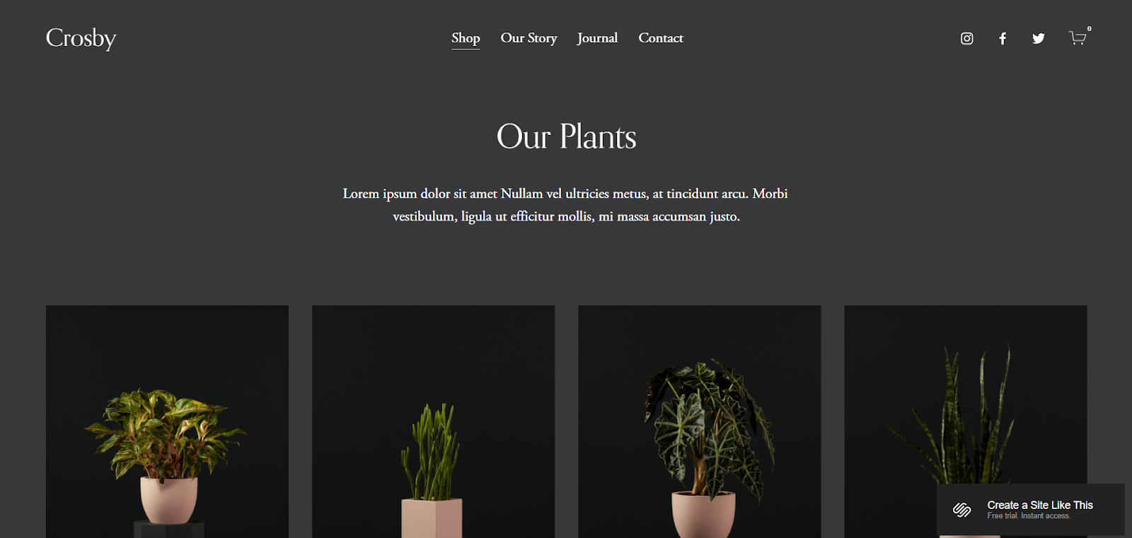Squarespace ecommerce website examples