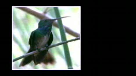 Birding In Honduras-Jardiel