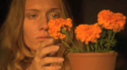Marigolds Awakening-Adam
