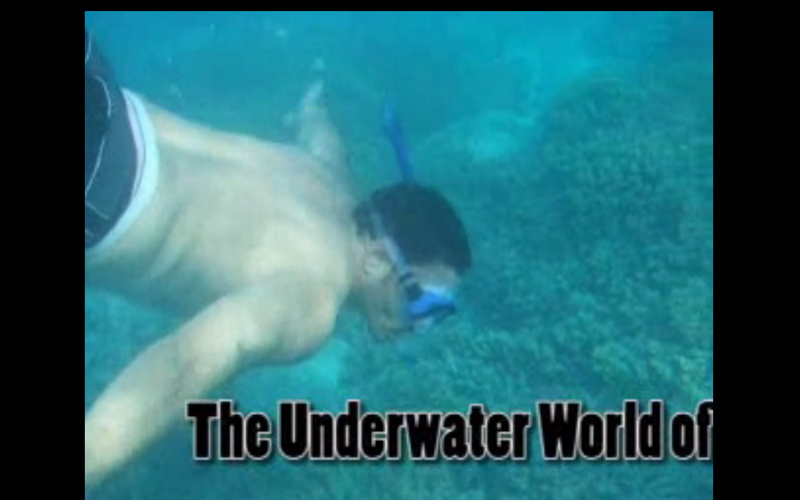 Underwater World In -Ernest