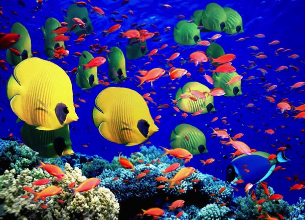 Seven Natural Wonders of the World: Fish in Great Barrier Reef