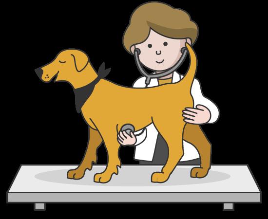 Fuzzy Veternarian Examining Dog
