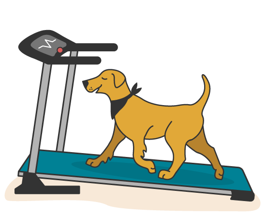 Fuzzy Dog on Treadmill