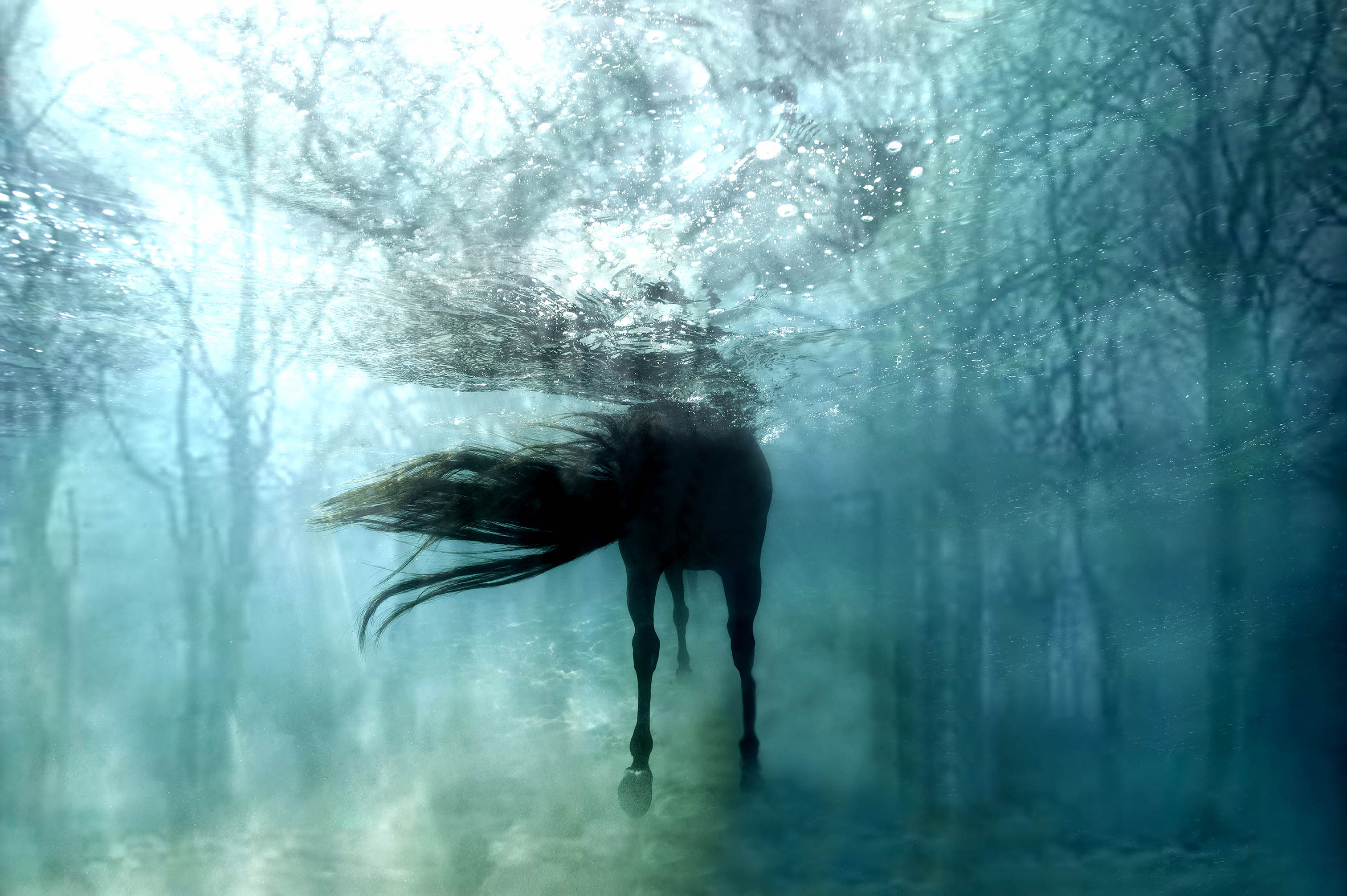 Hippolyta S Magical Horse I Gal Photography