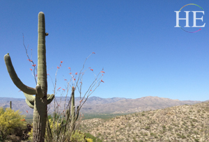 Saguaro National Park and Cactus Heaven