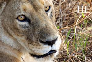 Serengeti Western Corridor's Grumeti River Basin