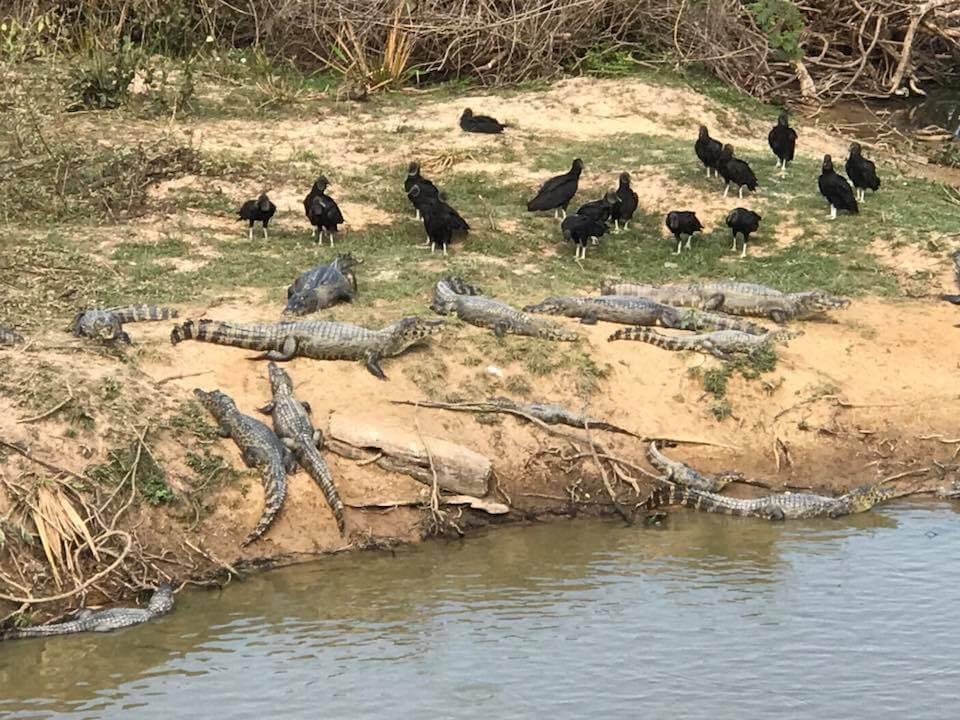 South Pantanal