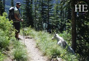 Logan Pass and Highline Trail