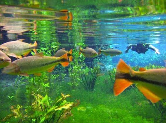 Prata River Snorkeling / Macaw Sinkhole