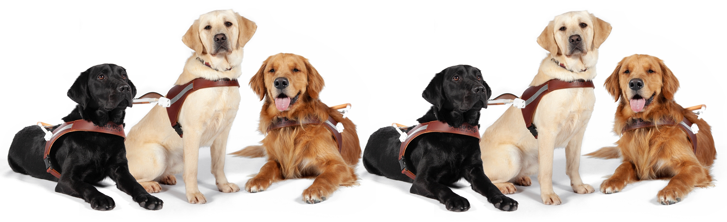 A line of six guide dogs wearing harnesses against a white background.