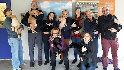 A photo of some of the Development Department team members, all holding puppies.