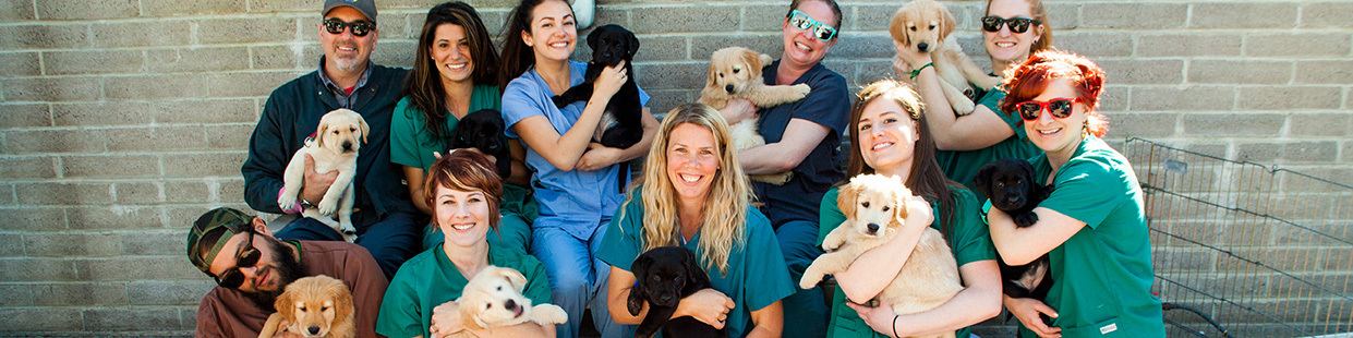 10 employees from a company wear scrubs and smile holding puppies in the puppy socialization yard on the San Rafael, CA campus