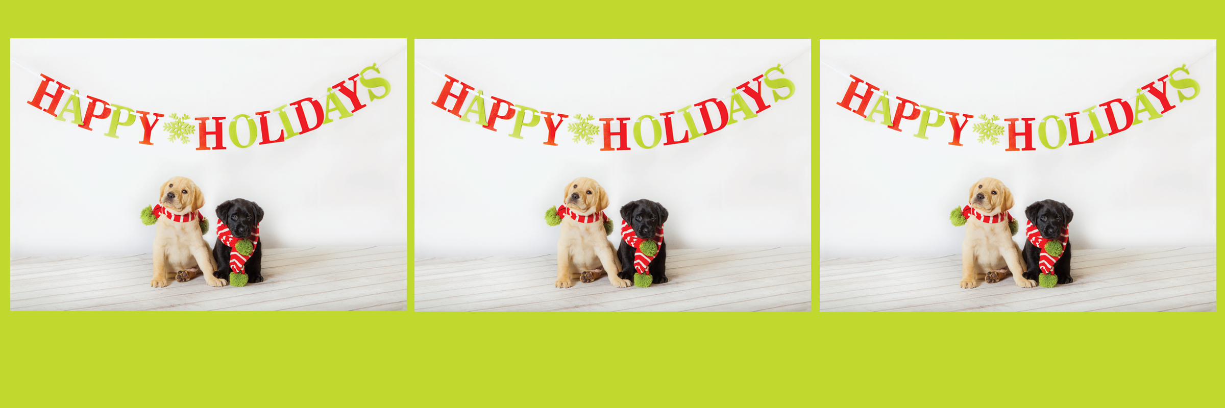 """Two baby Labrador puppies (one yellow, one black) sit front and center beneath a banner that reads """"Happy Holidays."""" The pups are wearing red scarves."""
