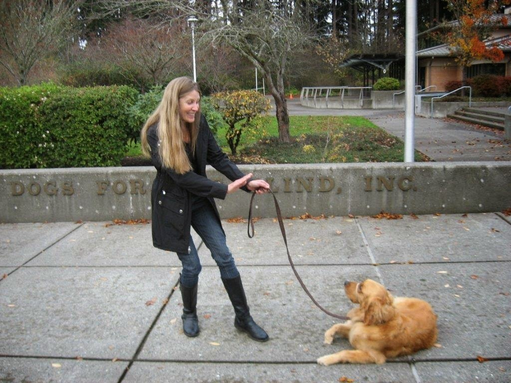 """Karyn and Ceili (Golden Retriever) practice the command """"stay"""""""