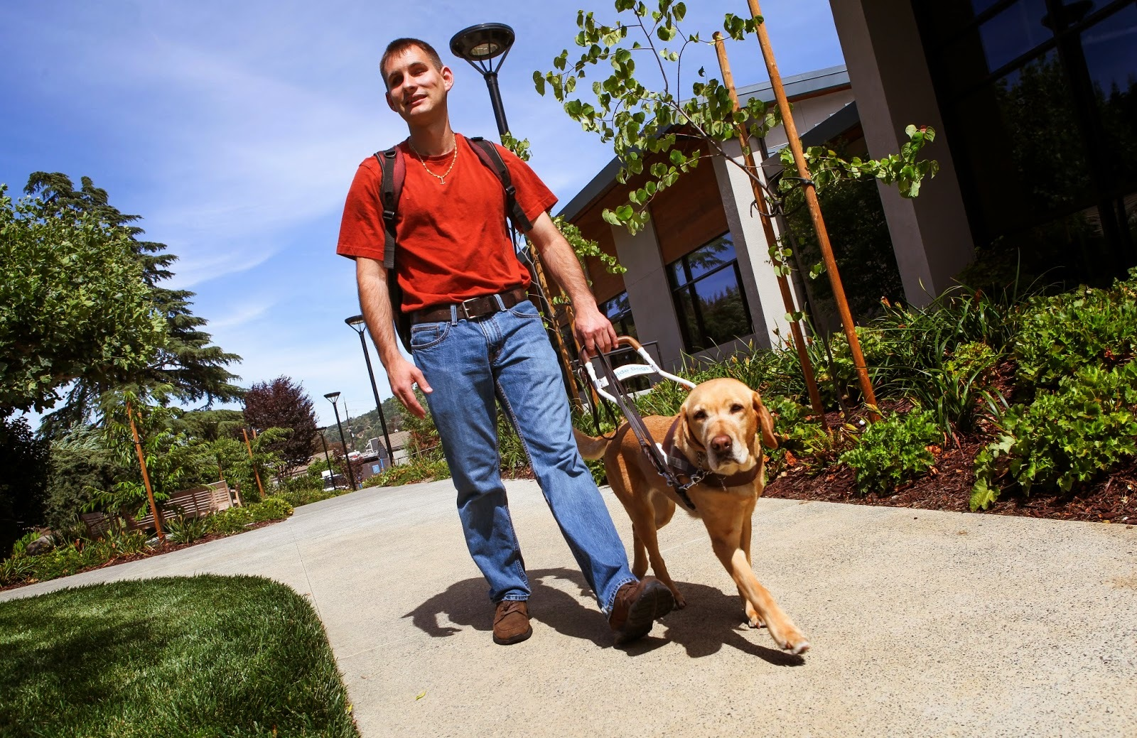 Jake wears his backpack and walks on campus with his guide Angelina (yellow Lab)