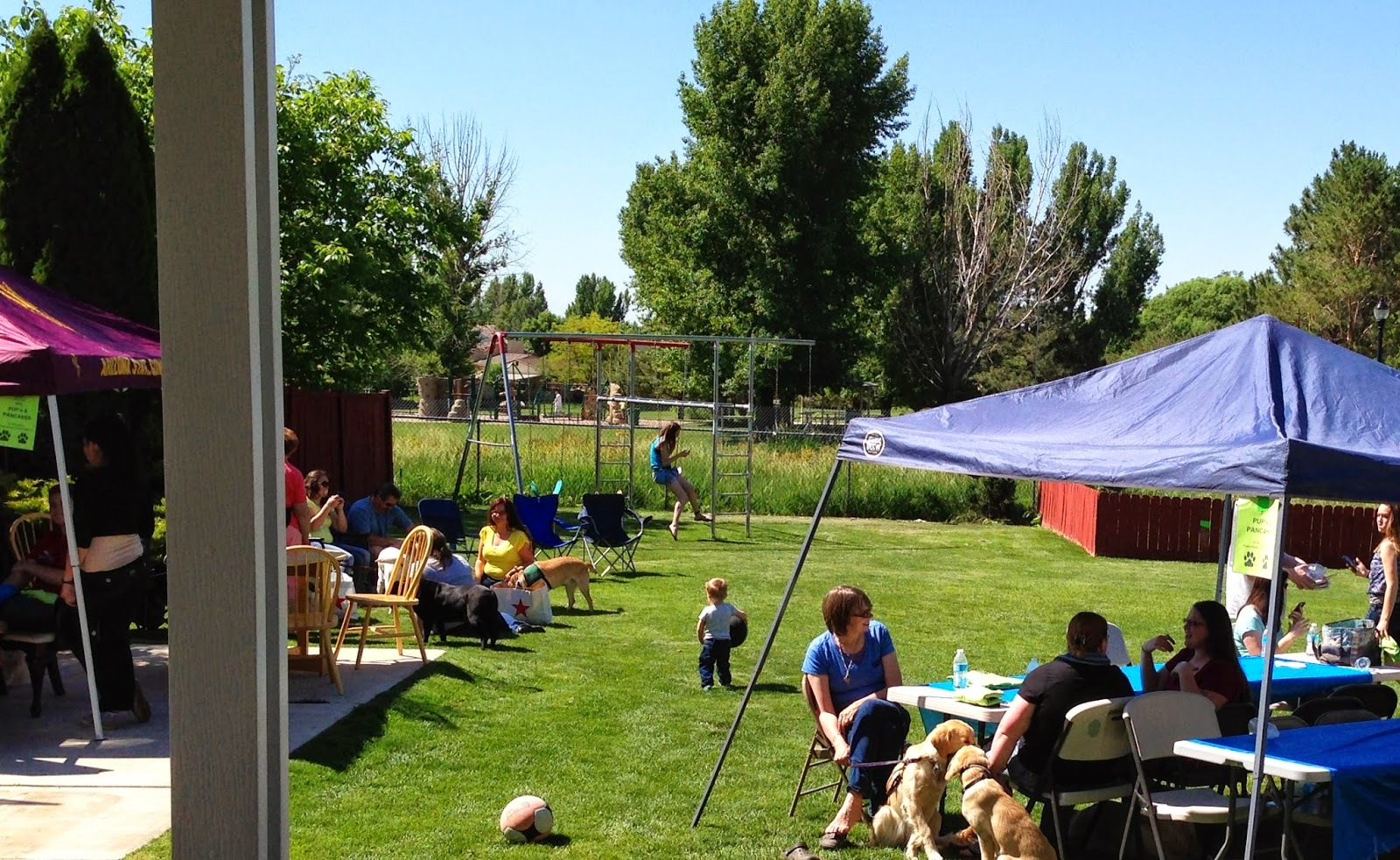 Tables and tents set up in a beautiful green backyard on a sunny day with people and dogs hanging out in the shade.