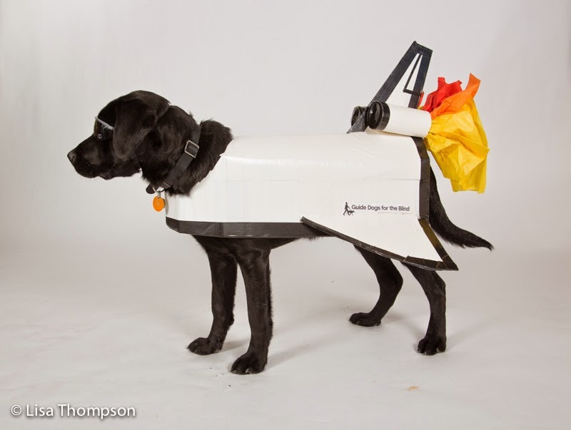 Black lab puppy rocket dressed as a white rocket with black sunglasses and colorful paper flames at the end.