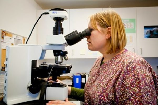 Technician looks through microscope at a slide.