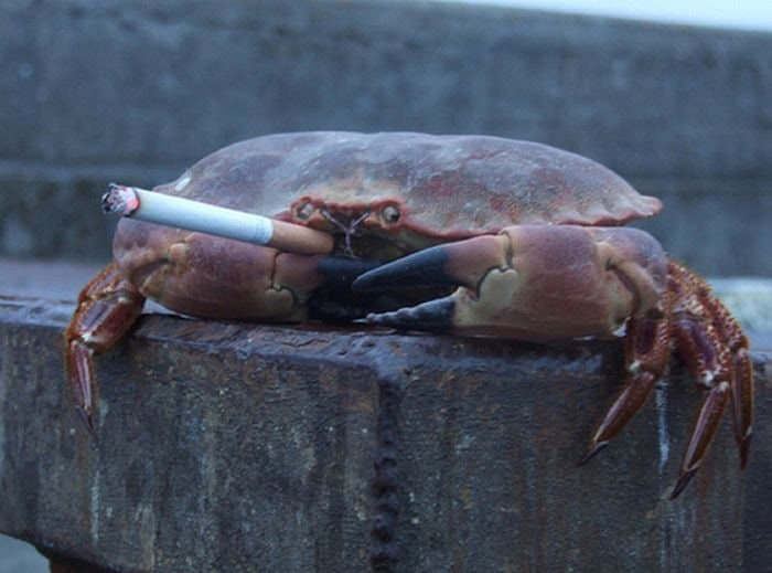 Hell Crab Welcomes You to Hell