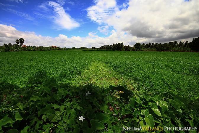 Fields in Hampi