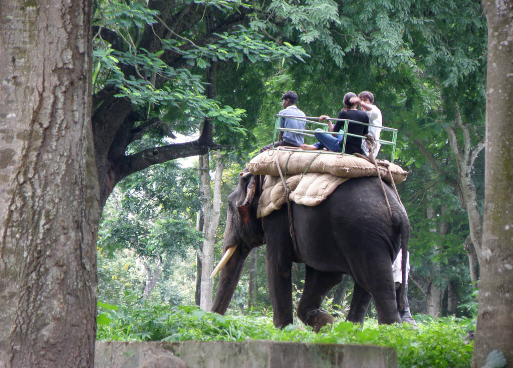 A ride on an elephant