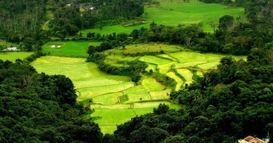 Coorg Scenery