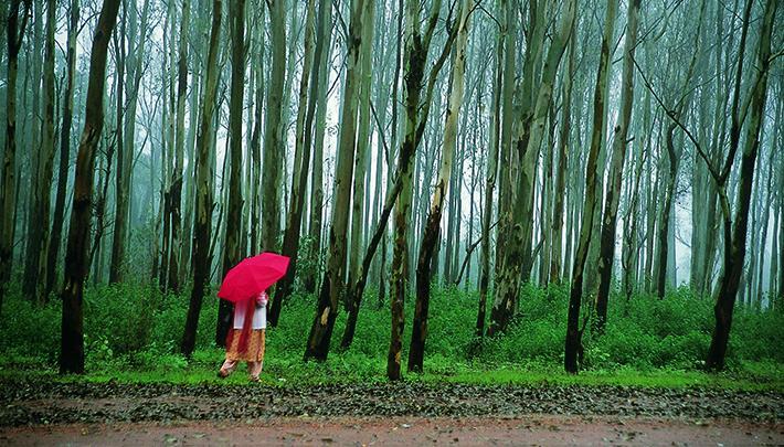 Monsoon in Pachmarhi_FI