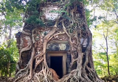 Overgrown roots at Roulos group of temples 2