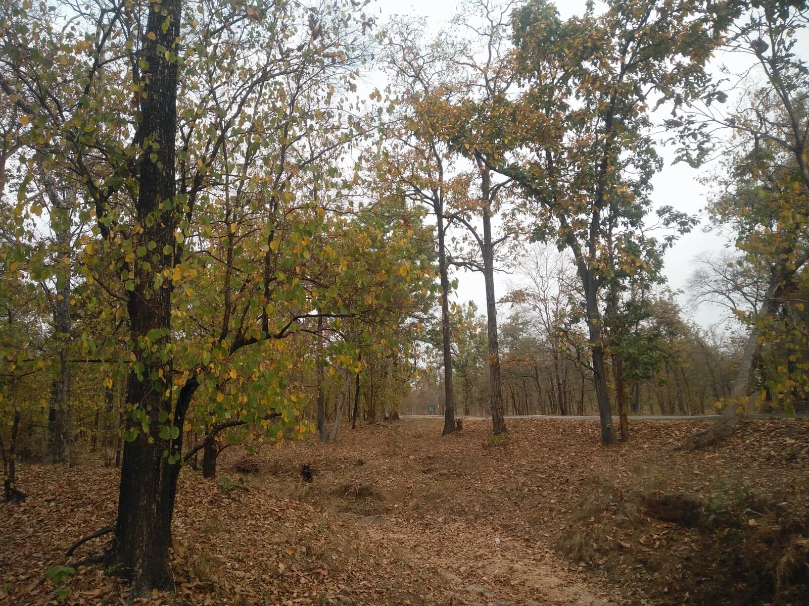 Pench National Park_Cover