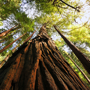 about muir woods
