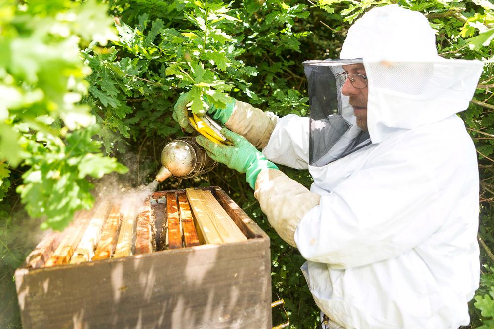 Backyard Beekeeper