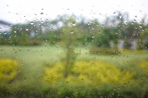 Rain in garden