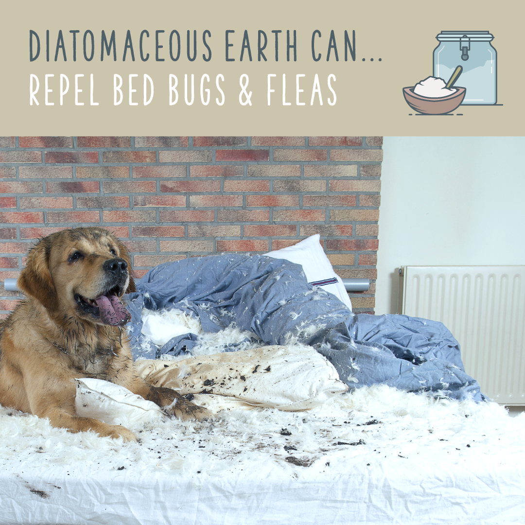 diatomaceous earth bed bugs fleas