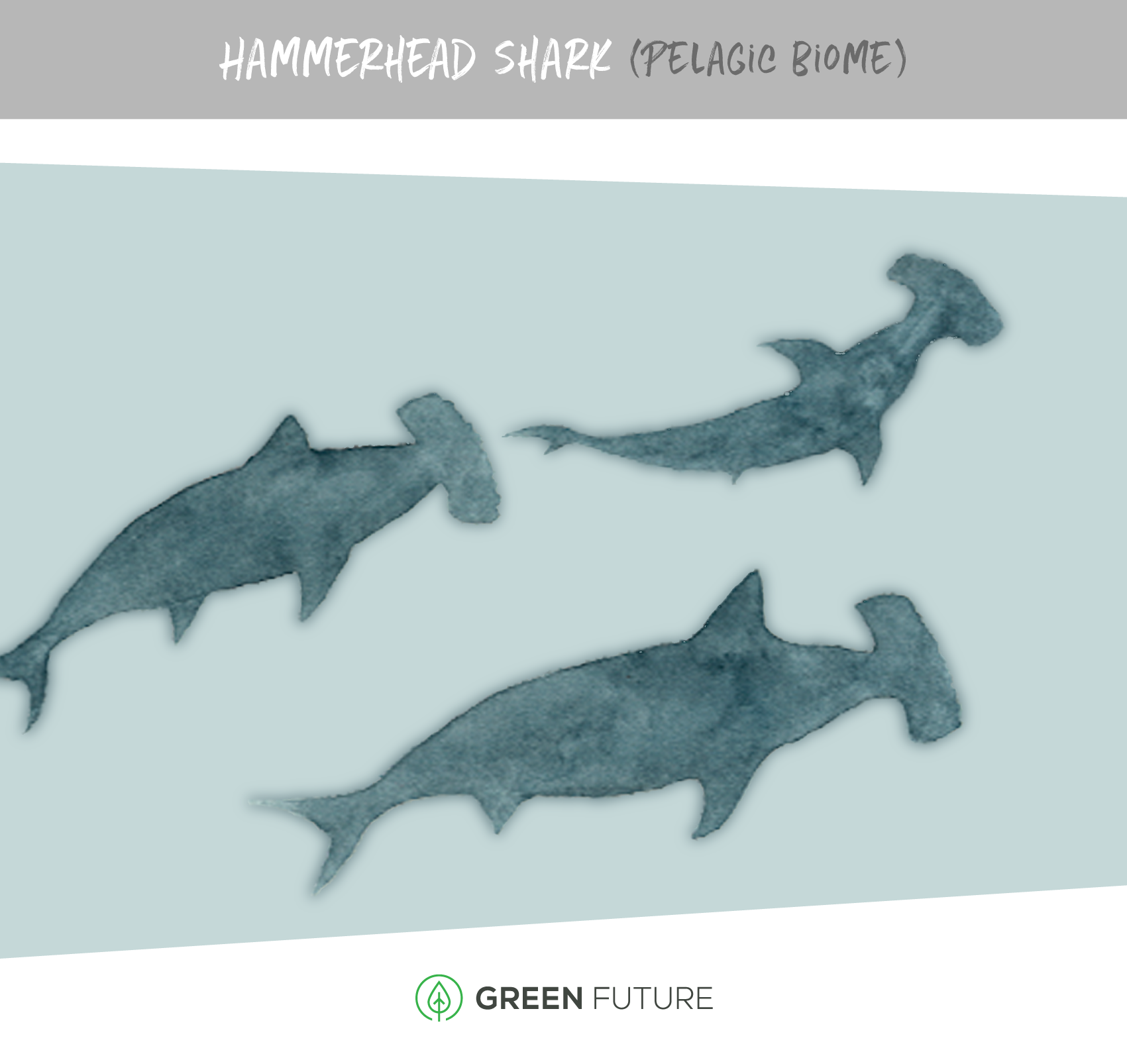 hammerhead shark illustration marine biome