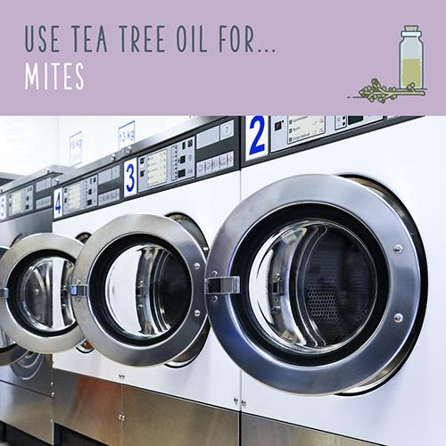 tea tree oil for mites