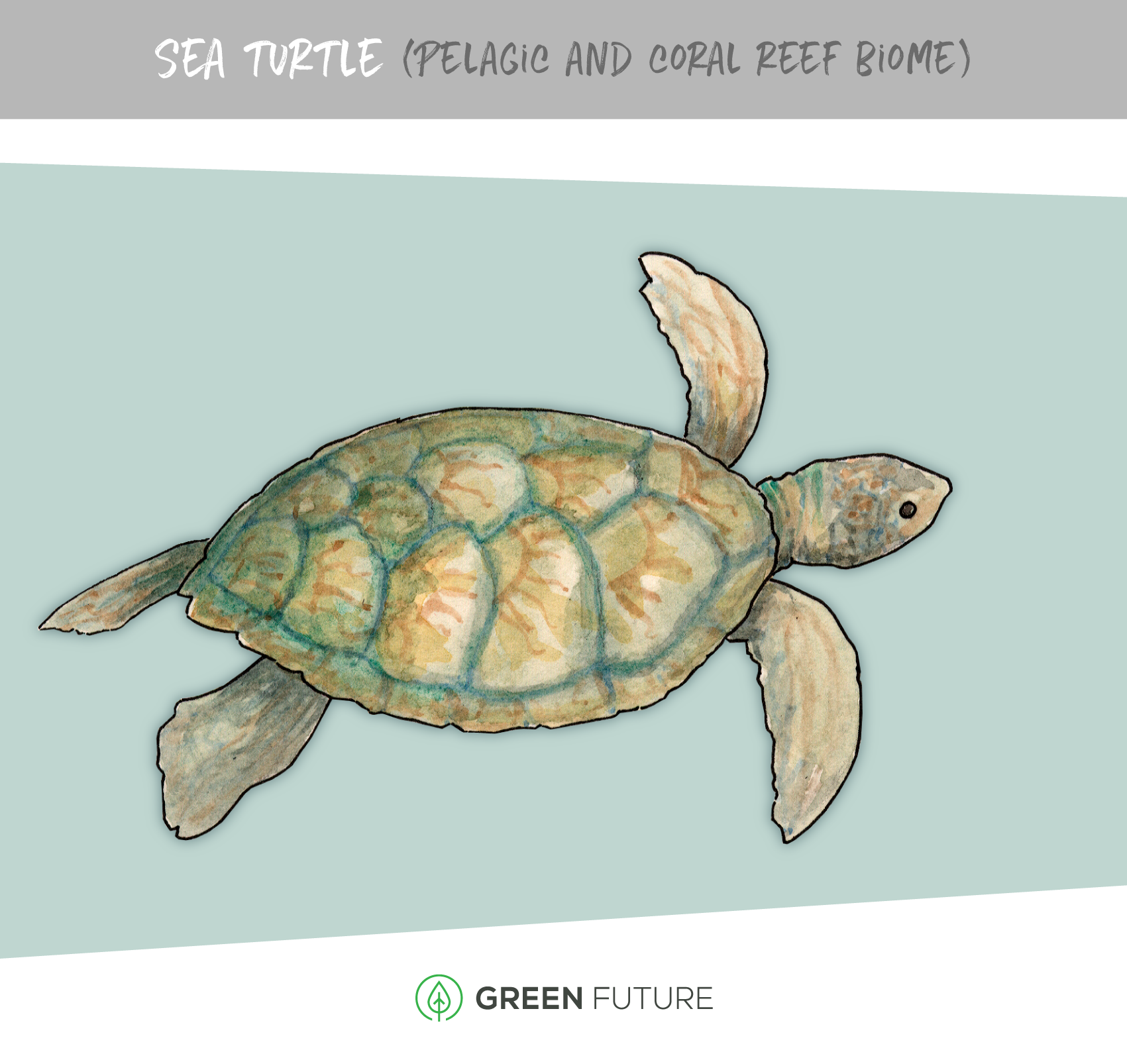 turtle watercolor marine biome