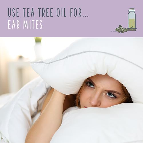 tea tree oil for ear mites