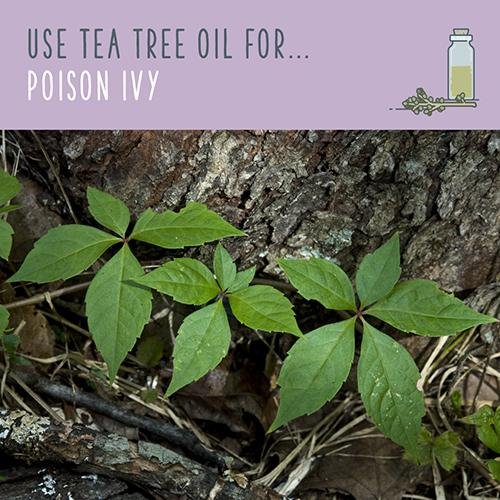 tea tree oil for poison ivy