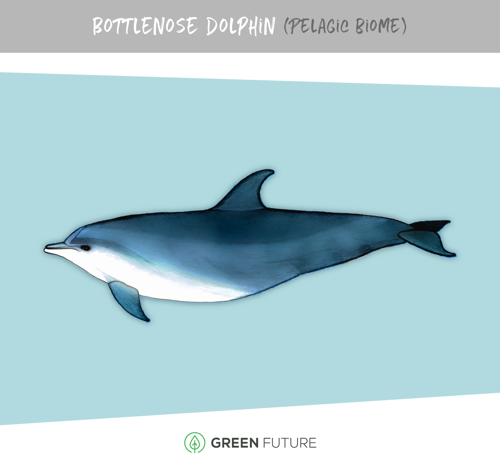 dolphin illustration marine biome