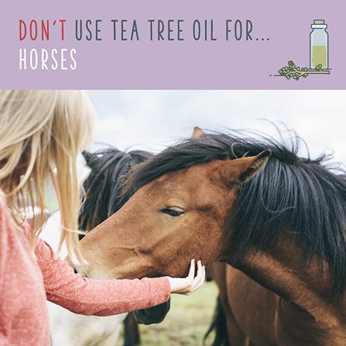tea tree oil for horses
