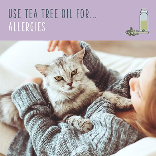 tea tree oil for allergies