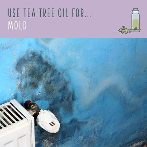 tea tree oil for mold