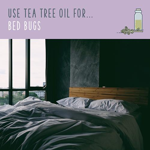 tea tree oil for bed bugs