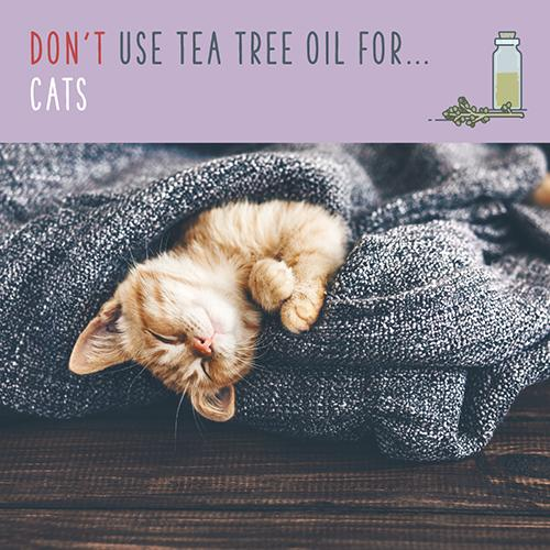 tea tree oil for cats
