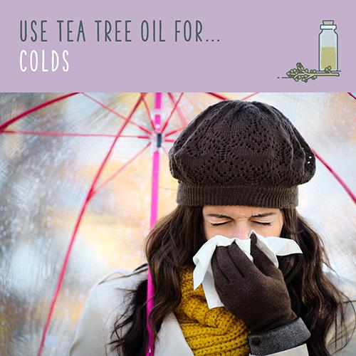 tea tree oil for colds