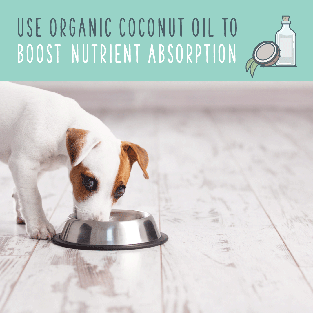 coconut oil for dogs health