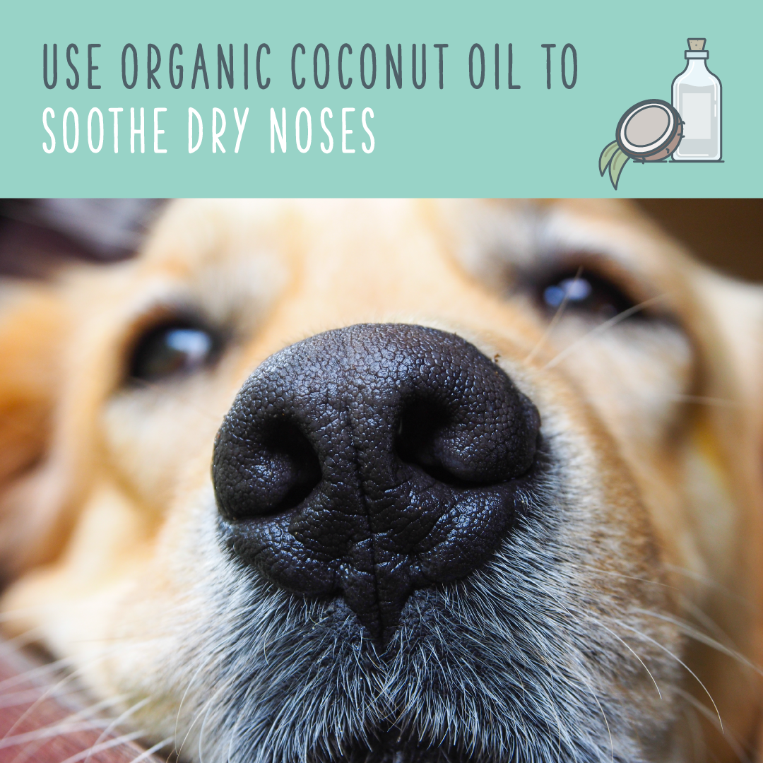 coconut oil to soothe dry nose